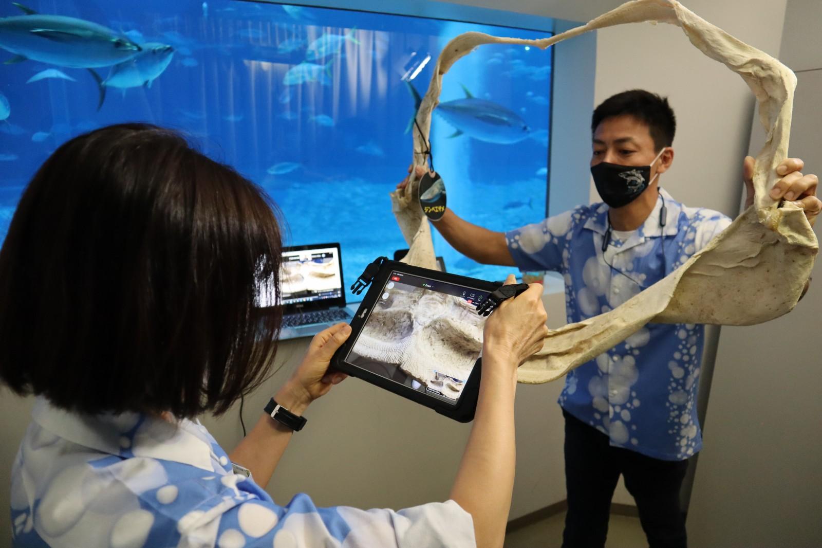子どもたちわくわく♪ 沖縄「美ら海水族館」バックヤードツアー 「海とさかな自由研究」参加賞としてニッスイが